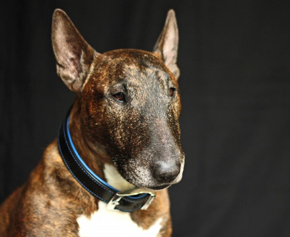 Compare dog training collars